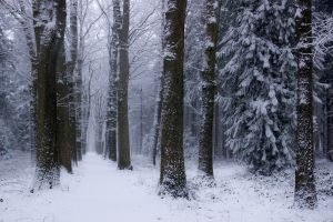 cold netherlands nature winter trees forest landscape snow