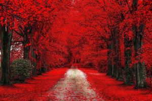 color correction red leaves fall nature trees road