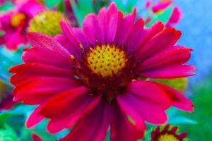 colorful flowers plants