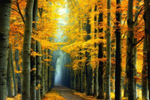 colorful landscape nature yellow forest mist leaves fairy tale road trees fall