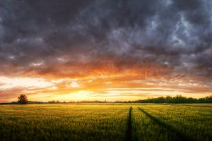 colorful panoramas sky field nature trees clouds landscape sunset