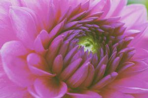 colorful purple flowers flowers macro petals