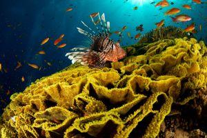 colorful sea fish underwater coral animals