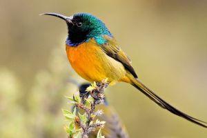 colorful sunbirds birds