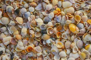 colorful texture seashell