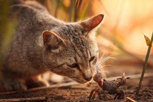 crabs cats animals
