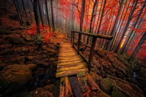 creeks trees landscape forest nature colorful atmosphere fall mist italy bridge