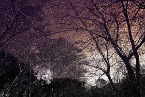 creepy trees nature branch