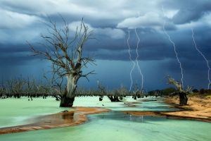 dead trees nature storm beach lightning