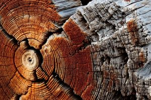dead trees nature wooden surface circle trees dry  pattern wood texture