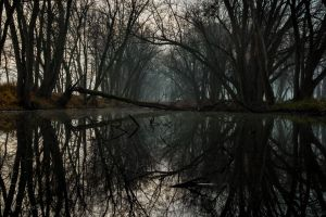 dead trees reflection gloomy nature river dark fall water