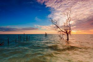 dead trees sunset flood lake nature
