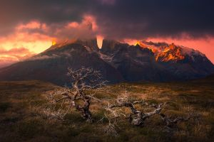 dead trees sunset snowy peak clouds patagonia chile mountains grass landscape nature torres del paine