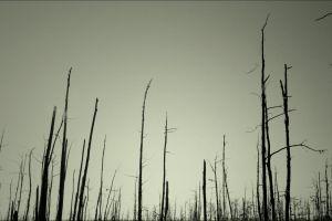 dead trees trees wood