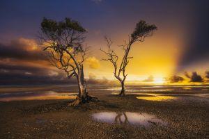 dead trees yellow horizon nature photography sand