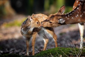 deer animals nature baby animals