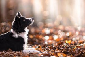 depth of field dog fall animals leaves nature