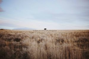 depth of field dry grass misattributed quotes field