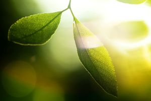 depth of field macro photography nature plants leaves