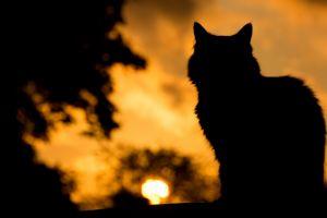 depth of field nature pet dark animals clouds sun trees cats sunset silhouette