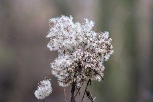depth of field plants herbarium