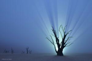 desert night namibia horizon mist lights nature trees branch africa
