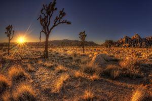 desert trees nature arizona usa