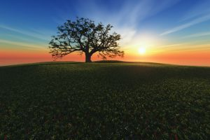 digital art richard mohler trees