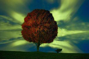 digital art trees bench sky artwork
