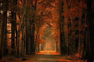 dirt road netherlands landscape sunlight forest path leaves amber fall nature trees