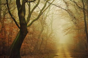dirt road trees landscape atmosphere moss yellow fall forest leaves morning path nature mist daylight