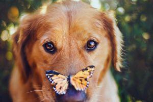 dog closeup animals butterfly
