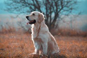 dog nature animals