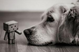 dog photography danbo depth of field blurred macro