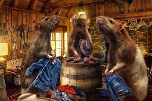 door wall rats window jeans interior fireplace fur sunglasses cowboy hats photography clothing cigars boots couch
