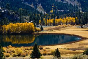 dry grass fall reflection landscape forest lake nature
