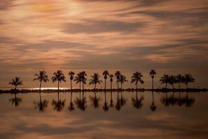 dusk florida palm trees sea landscape