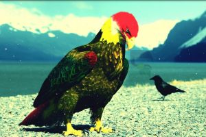 eagle digital art animals
