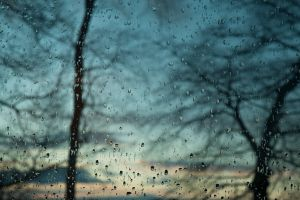 evening blue water on glass rain trees window water drops
