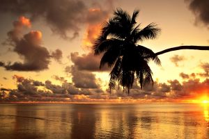 evening environment shore horizon water orange photography nature hawaii beach clouds sunset palm trees sun sunlight
