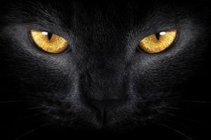 eyes yellow eyes animals cats