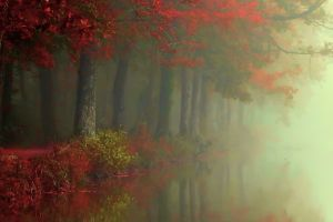 fall atmosphere red trees forest reflection mist river leaves morning landscape shrubs nature