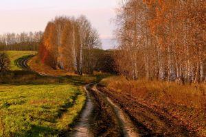 fall dirt road trees nature road