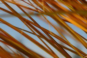 fall grass macro