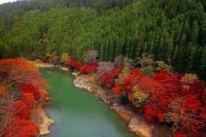 fall hills leaves trees forest red river nature green colorful boat landscape japan