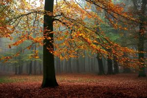 fall leaves forest mist trees sunlight landscape nature