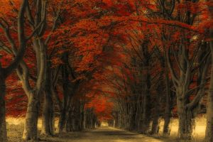 fall leaves landscape road trees nature