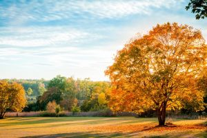 fall nature field trees landscape