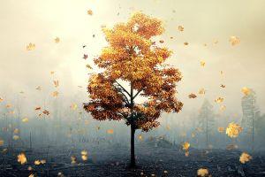 fall nature plants
