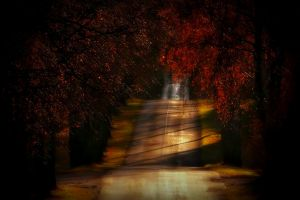 fall red lithuania trees leaves landscape nature road sunlight